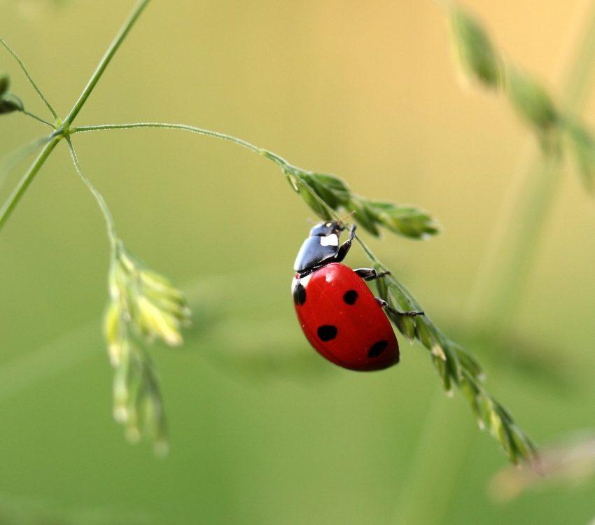 close-up-photo-of-ladybug-on-leaf-during-daytime-121472