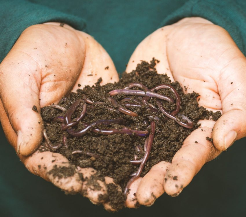 earthworms-on-a-persons-hand-3696170